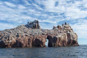 Oricine ar ocupa o insulă plină de excrementele păsărilor marine