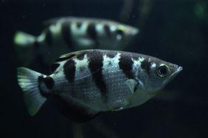 Peştii pot recunoaşte feţe umane