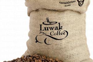 Kopi Luwak, cea mai specială cafea din lume