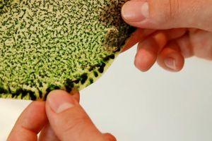 Frunza biologică sintetică capabilă să producă oxigen
