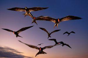 Cum pot dormi păsările în timpul zborului