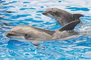 Delfinii ar putea avea o limbă proprie, sugerează noi cercetări