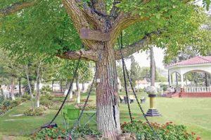 Arborele care a fost arestat