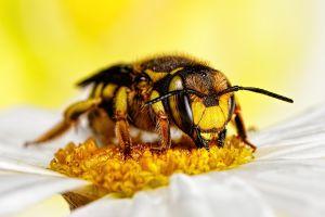 Albinele au diferite joburi în funcţie de vârstă