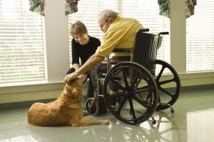 Rolul terapeutic al animalelor de companie