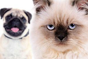 În sfârşit am decodat expresiile faciale ale pisicilor!