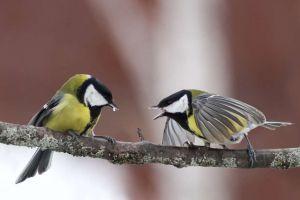 Masculii din lumea zburătoarelor preferă vecinii cu aceeaşi personalitate