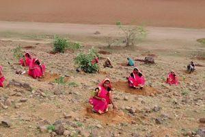 India tocmai a plantat 66 de milioane de copaci în doar 12 ore