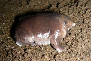 Au găsit cea mai drăguţă broască din lume