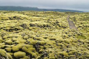 Câmpurile de lavă ale Islandei, acoperite cu muşchi