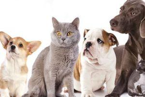 Câinii şi pisicile: cine sunt mai deştepţi?
