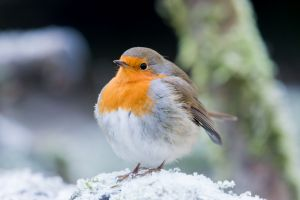 Păsările ştiu cum să îşi ţină de cald